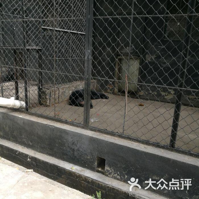 虎鳄农场动物主题公园图片-北京动物园-大众点评网