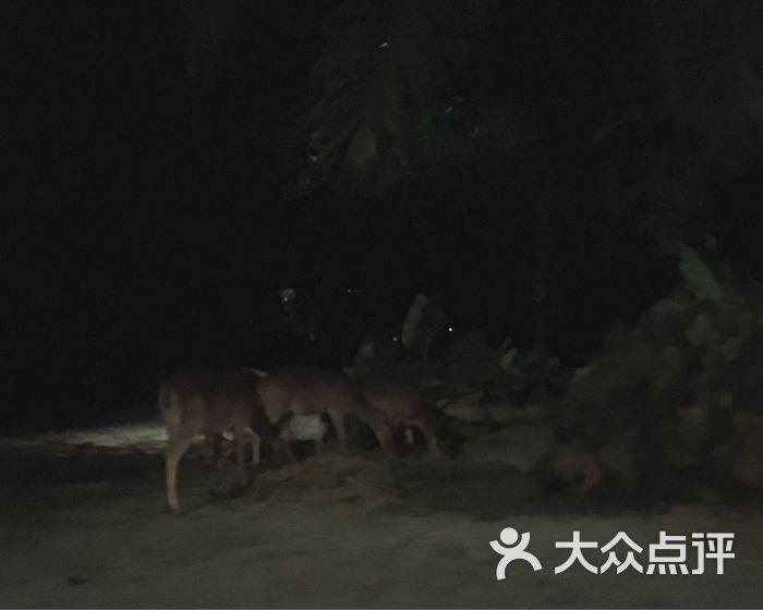 夜间野生动物园图片 - 第1206张