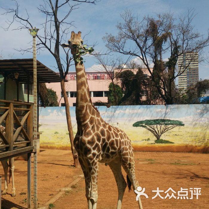 昆明动物园图片-北京动物园-大众点评网
