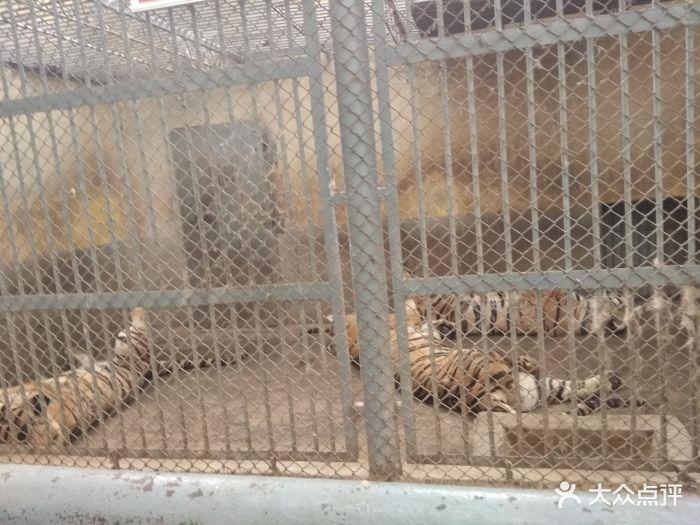渭滨公园动物园图片 - 第2张
