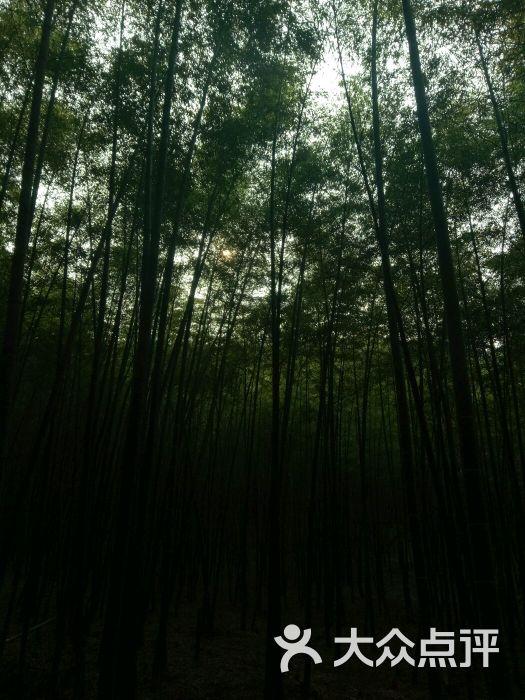 惠山国家森林公园图片 - 第3张