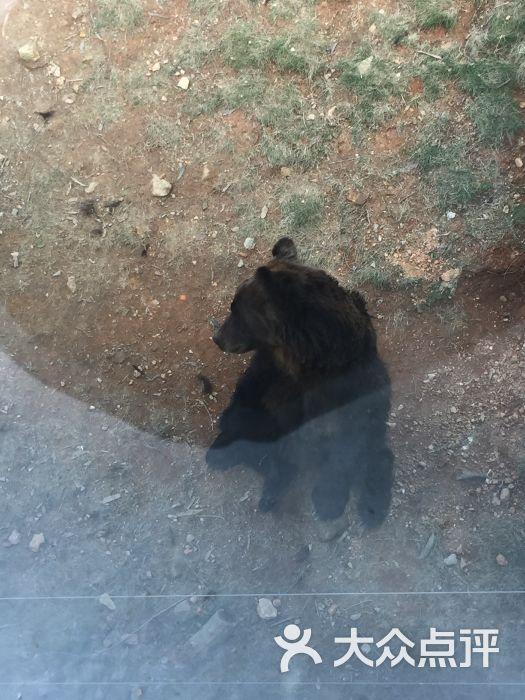 海丝野生动物园图片 - 第1张