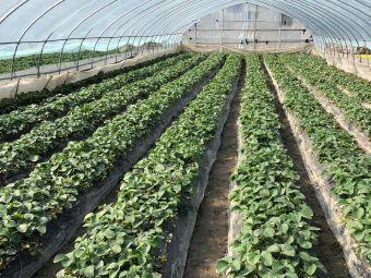 白水草莓园