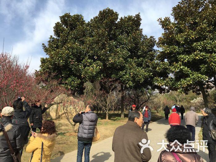 梅花山风景区-图片-南京景点-大众点评网