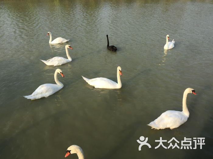 海口天鹅湖动物乐园图片 - 第10张