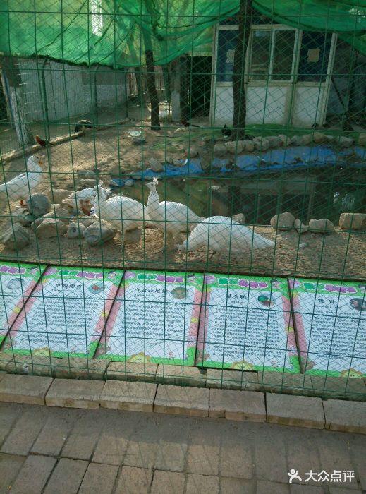 临汾市动物园图片 - 第75张