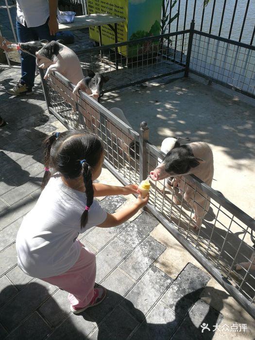 朝阳公园亲子动物园图片 - 第22张