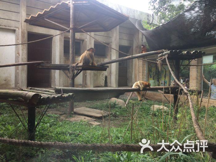 成都动物园图片 - 第16张