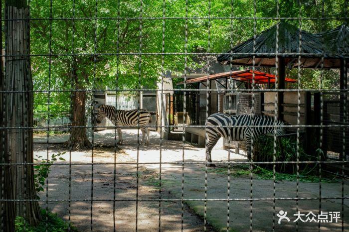 武汉动物园斑马图片 - 第1126张