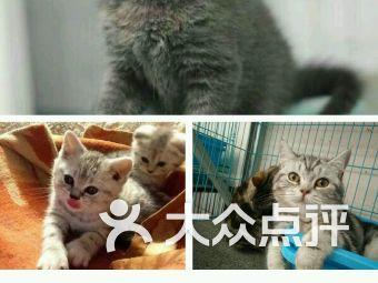 猫猫狗狗宠物生活馆