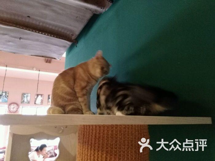 懒猫咖啡萌萌哒猫主题咖啡馆-图片-济南美食-大众点评