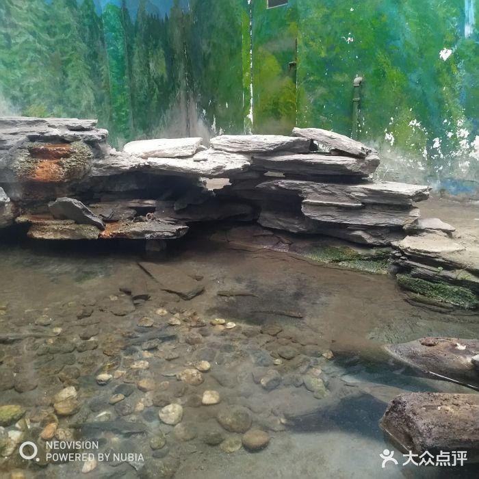 成都动物园景点两栖动物馆娃娃鱼图片 - 第17张