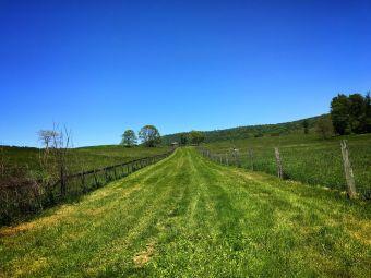 Naked Mountain Winery & Vineyards