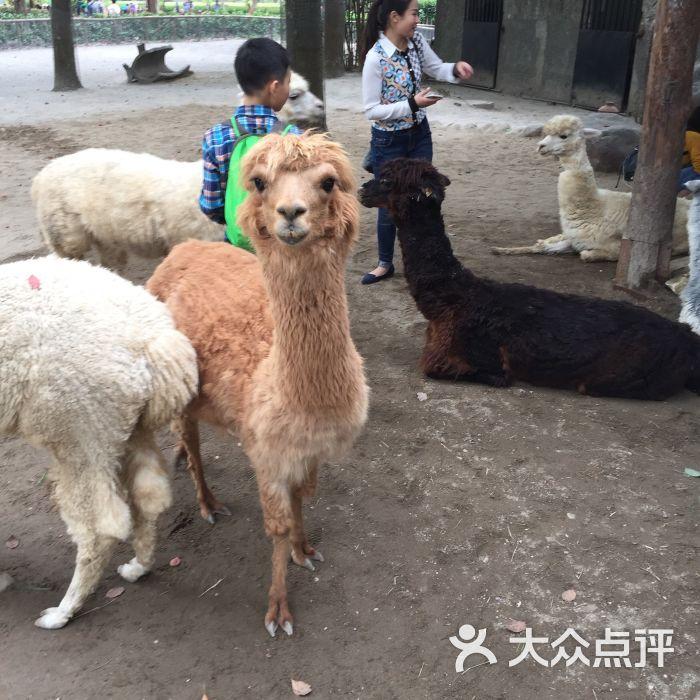 上海野生动物园-图片-上海景点-大众点评网