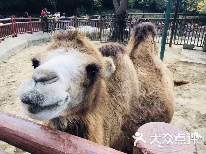 无锡动物园·太湖欢乐园图片 - 第118张