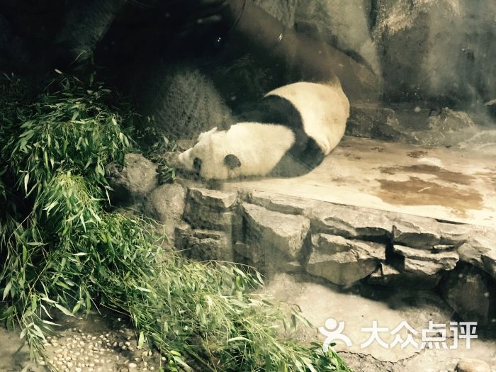 大熊猫睡觉觉