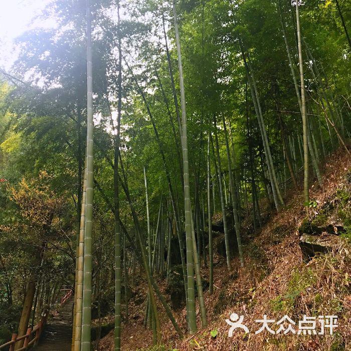 中国大竹海景区图片-北京自然风光-大众点评网