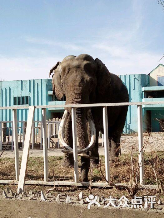 天津动物园-图片-天津景点-大众点评网