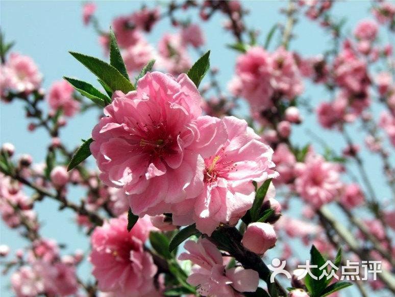 百望山森林公园梅花图片 - 第2642张