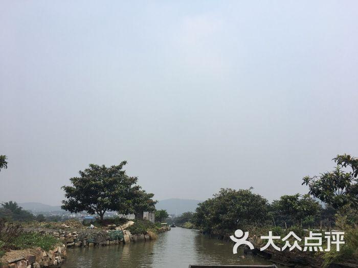 东山槎湾白玉枇杷-图片-苏州周边游-大众点评网