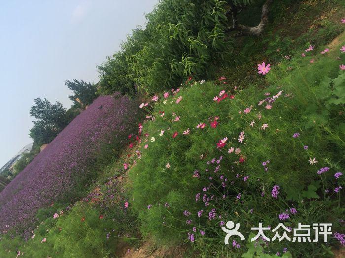 紫海蓝山薰衣草庄园图片 - 第4张