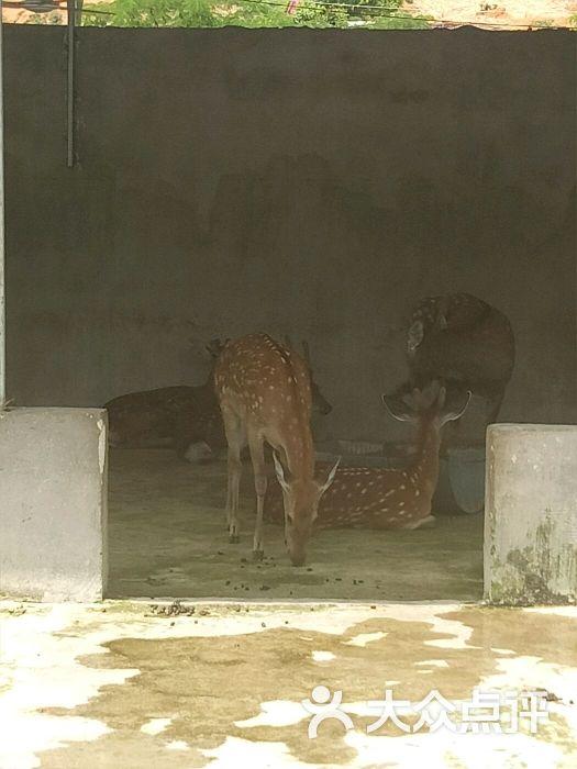 象鼻山动物园图片 - 第7张