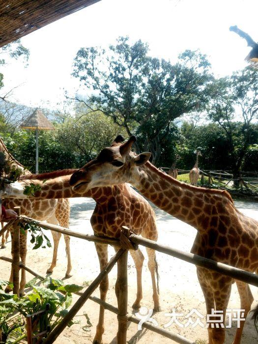 深圳野生动物园的全部评价-深圳-大众点评网