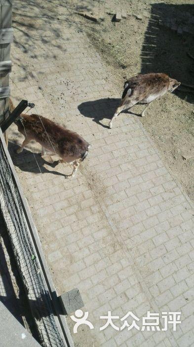 动物园 郑州动物园 默认点评                           坐地铁2号线