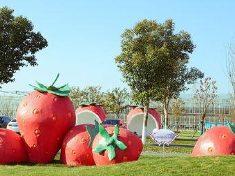 傅家边老朱精品草莓园