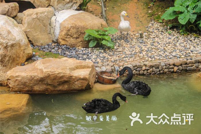 长隆酒店-酒店内的动物岛图片-广州酒店-大众点评网