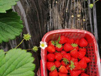 吴三草莓园