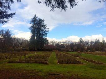 圣何塞市立玫瑰園