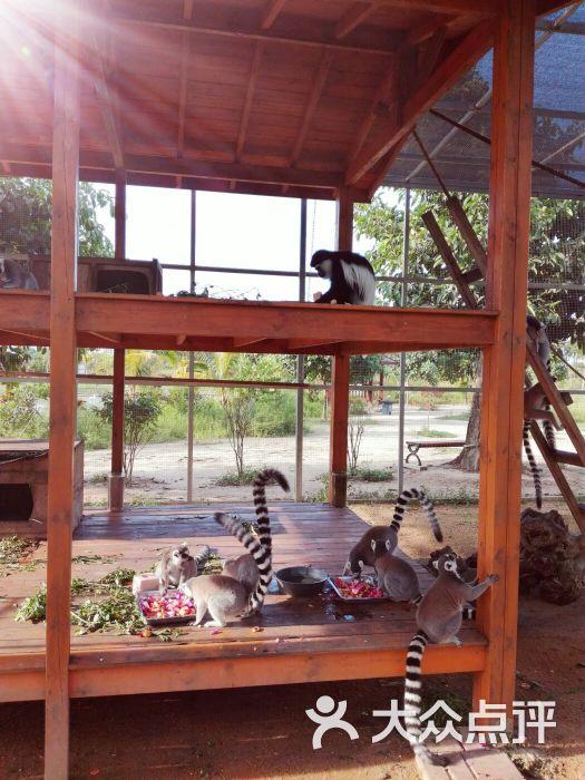 海口天鹅湖动物乐园图片 - 第60张