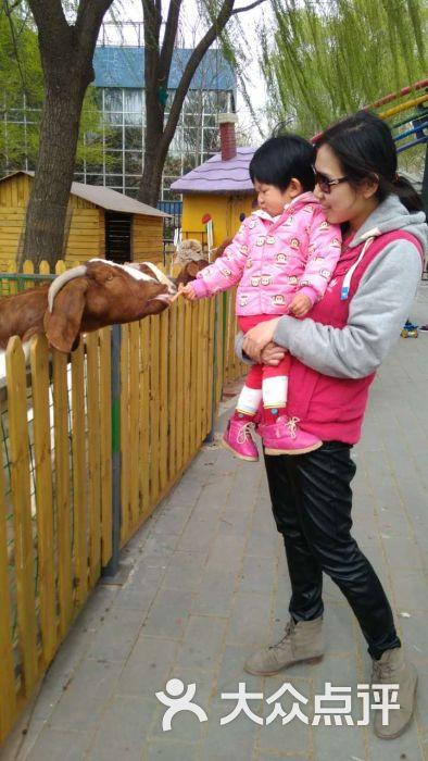 朝阳公园亲子动物园图片 - 第3张
