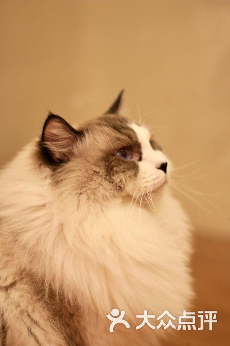 贝斯特猫咪咖啡馆图片 - 第4张