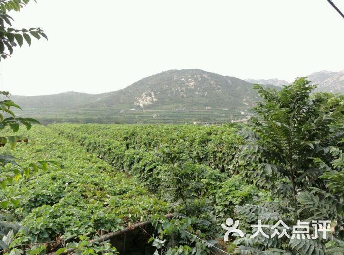 大泽山风景名胜区图片 - 第6张