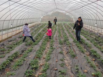 来悟农生态草莓采摘园