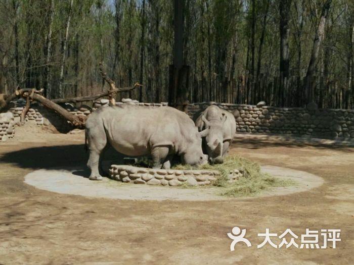 北京野生动物园-白犀牛图片-北京景点-大众点评网