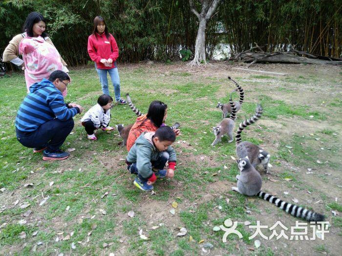 东莞寮步香市动物园图片 - 第95张