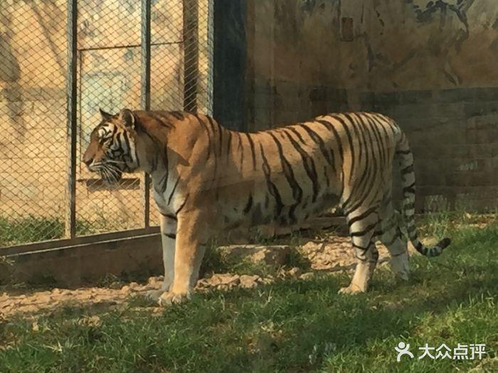 无锡动物园·太湖欢乐园景点图片 - 第85张