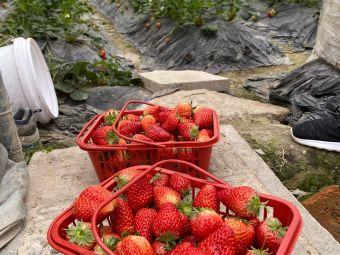 江东草莓之乡