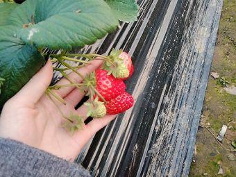 荷叶塘草莓园