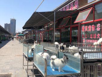 京丰宠物基地
