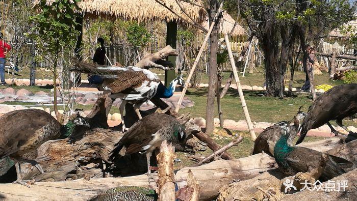 永鸿野生动物世界图片 - 第46张
