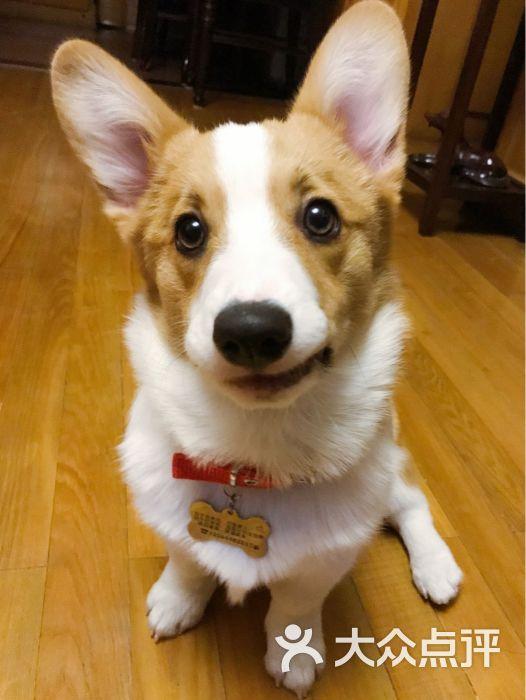 yummi(优咪)萌宠馆-图片-上海宠物-大众点评网