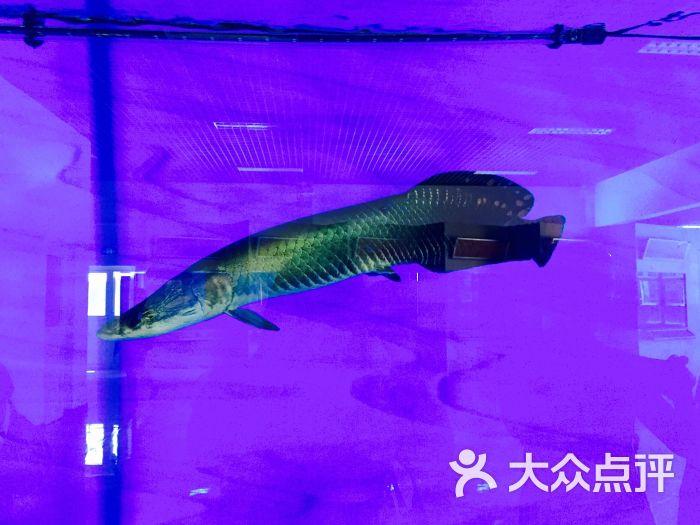 常见的水生动物
