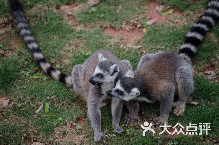 广州动物园图片 - 第125张