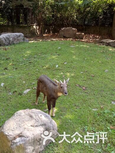 上海动物园-图片-上海周边游-大众点评网