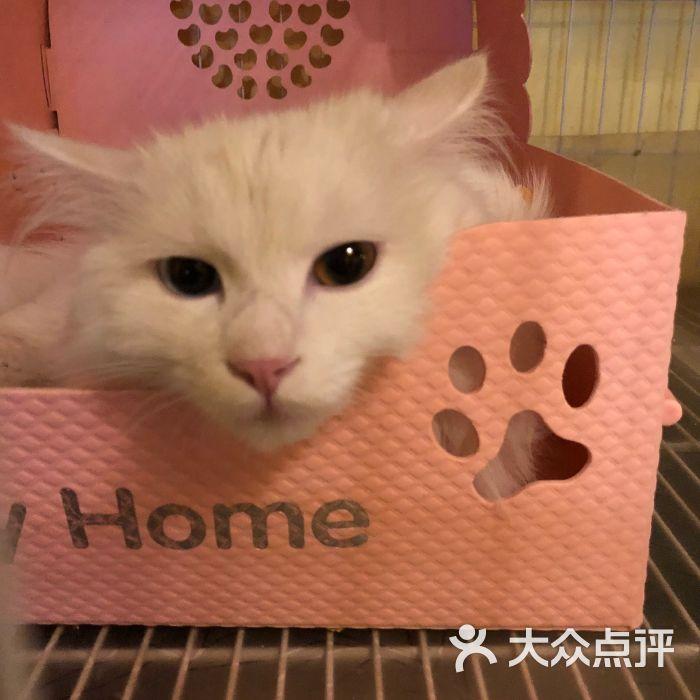 咖啡猫小窝猫咪主题西餐