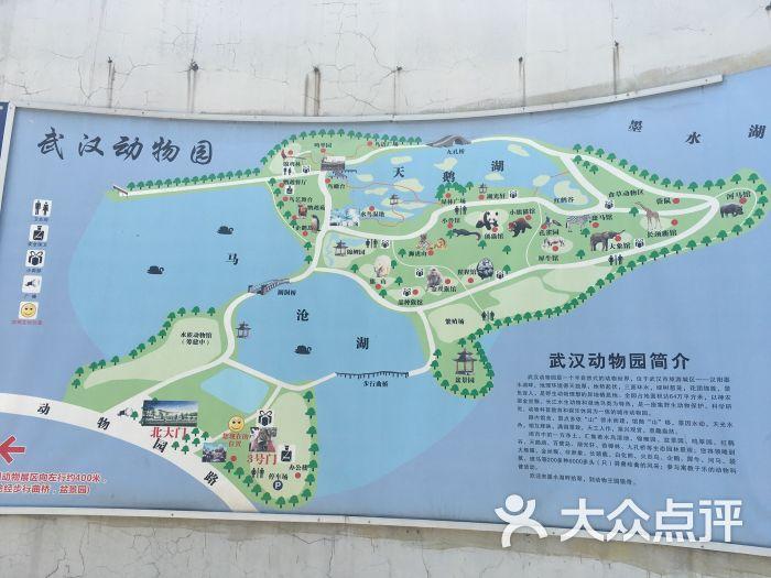 武汉动物园地图图片 - 第6张